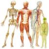 علائم رمزی بدن؛ نشانه های سلامتی یا بیماری!