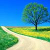 بهار طبیعت ؛  فرصتی نو برای بازسازی روان ( قسمت اول؛ سنخیت)